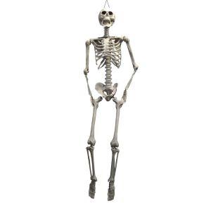 Skelet geraamte 1.65 m